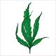 Marijuana Narcotic Cannabis Leaf Color Sketch - GraphicRiver Item for Sale