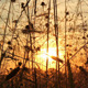 Grass At Sunset - VideoHive Item for Sale