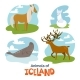 Animals of Iceland in Flat Modern Style Design - GraphicRiver Item for Sale
