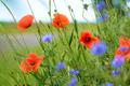 Red poppy - PhotoDune Item for Sale