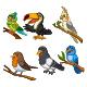 Set of Six Exotic Tropical Birds Cartoon - GraphicRiver Item for Sale