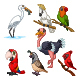 Set of Seven Cartoon Birds Character - GraphicRiver Item for Sale