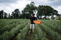 Man walking through a vegetable field, carrying orange plastic crate. - PhotoDune Item for Sale