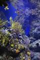 Marine life in the aquarium - PhotoDune Item for Sale