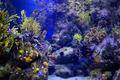 Beautiful marine animals in the aquarium - PhotoDune Item for Sale