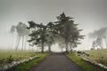 Road on a foggy morning - PhotoDune Item for Sale