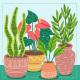 Houseplant collection - GraphicRiver Item for Sale