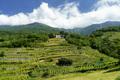 Vineyard of Valtellina at Traona - PhotoDune Item for Sale