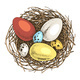 Hand Drawn Eggs and Nests - GraphicRiver Item for Sale