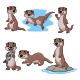 Set of Six Otter Animals Bundles - GraphicRiver Item for Sale