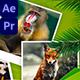 Animals World Slideshow - VideoHive Item for Sale