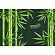 Realistic 3d Detailed Bamboo Chinese Green Plant Background Card. Vector - GraphicRiver Item for Sale