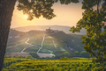 Langhe vineyards, Castiglione Falletto and a tree. Piedmont, Italy Europe. - PhotoDune Item for Sale