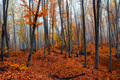 Fantasy foggy forest trees in the autumn mountains - PhotoDune Item for Sale