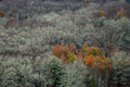 A group of trees with fall foliage stand out among the lichens of an already bare forest - PhotoDune Item for Sale