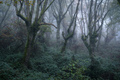 The morning fog in an oak forest in winter - PhotoDune Item for Sale