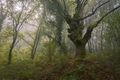 Mystical scene in a misty forest - PhotoDune Item for Sale