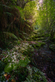 Light filters through the treetops to illuminate the old mossy cobblestones - PhotoDune Item for Sale