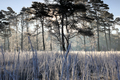 cold frosty morning over forest meadow - PhotoDune Item for Sale