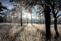 sunshine on frosted meadow and trees in frost - PhotoDune Item for Sale