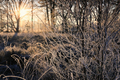 sunrise sunlight in frosted forest - PhotoDune Item for Sale
