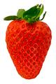 Isolated Organic Strawberry - PhotoDune Item for Sale