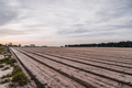 Agricultural filed on the springtime - PhotoDune Item for Sale