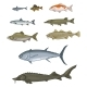 Vector Set of Cartoon Fish - GraphicRiver Item for Sale