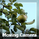 Moving Camera In A Garden 2 - VideoHive Item for Sale