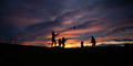 Silhouette of a young family of five playing with a ball outside - PhotoDune Item for Sale