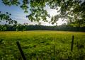Meadow In Summer - PhotoDune Item for Sale