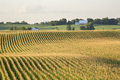 Corn field and barn on rolling hills in late summer sunlight - PhotoDune Item for Sale