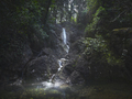 Stream waterfall inside a forest. Bibbona, Tuscany, Italy. - PhotoDune Item for Sale