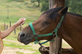 Human Touch on a Horse. Horse Enjoy the Human Touch - PhotoDune Item for Sale