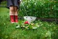 Unrecognizable small girl working in vegetable garden, sustainable lifestyle - PhotoDune Item for Sale
