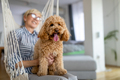 Little dog, poodle brown puppy at home with senior woman owner - PhotoDune Item for Sale