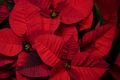 floristeria parera - PhotoDune Item for Sale