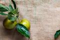 Juicy Ripe Yellow Apples - PhotoDune Item for Sale