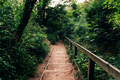 Wooden stairs in amazing green forest - PhotoDune Item for Sale
