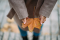 Autumn leaves in girl hands close view - PhotoDune Item for Sale