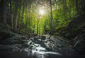 Abetone, stream waterfall inside a forest. Apennines, Tuscany, Italy. - PhotoDune Item for Sale