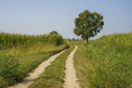 Path in the country near Bereguardo, Pavia, Italy, at September - PhotoDune Item for Sale