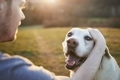 Man stroking his happy dog on meadow at sunset - PhotoDune Item for Sale