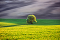 Rural landscape with field and tree - PhotoDune Item for Sale