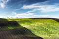 Rural spring landscape with colored striped hills with trees - PhotoDune Item for Sale