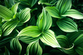 Green plants leaves close up - PhotoDune Item for Sale