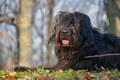 Shepherd dog in the woods - PhotoDune Item for Sale