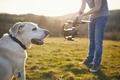 Cute dog posing for filming on meadow - PhotoDune Item for Sale