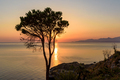 Lonely tree on the cliff at Tyrrhenian Sea - PhotoDune Item for Sale