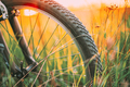 Bike Bicycle Wheel In Summer Green Grass Meadow Field. Close Up Detail. Sunset Sunrise Time Sunlight - PhotoDune Item for Sale
